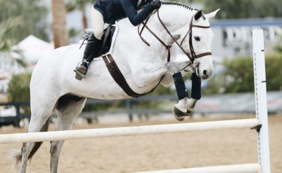 Pferdebetrieb retten